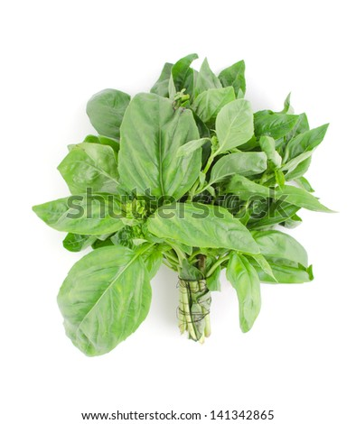Bunch of fresh green basil isolated on white - stock photo