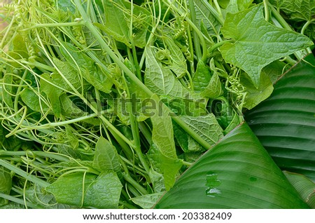 Bunch of fresh green chayote on grocery store - stock photo