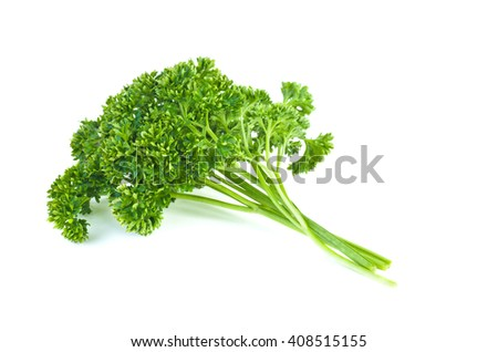 Bunch of fresh green curly parsley. Isolated on white background - stock photo
