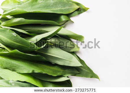 Bunch of Fresh Green Rams Onion or Ramsoms, A big ingredient in the New Nordic Culinary Arts and cuisine  - stock photo