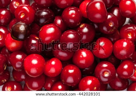 Bunch of fresh juicy cherries  in close up photo - stock photo