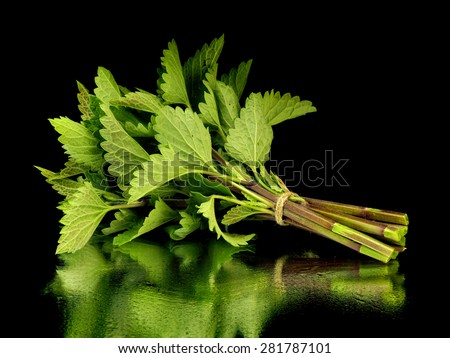 Bunch of fresh melissa on a black background with reflection - stock photo