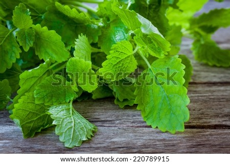 bunch of fresh melissa on a wooden background - stock photo
