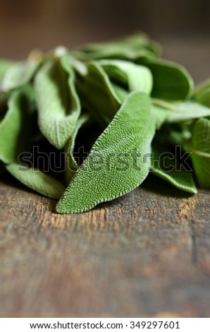 Bunch of fresh organic sage on old wooden table.