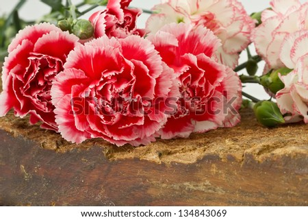 Bunch of fresh pink and white carnations on wooden background. - stock photo