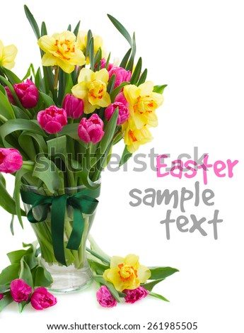bunch  of fresh pink tulip flowers and yellow daffodils in glass  vase isolated on white background - stock photo