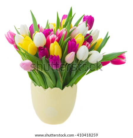 bunch of fresh purple, pink, yellow and white tulip flowers in yellow pot  isolated on white background