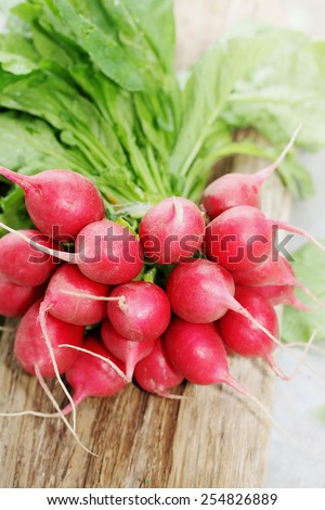bunch of fresh radishes ecological, in the garden - stock photo