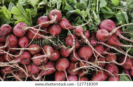Bunch of fresh radishes in a stack