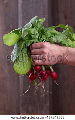 Bunch of fresh radishes in the farmer's hands - stock photo