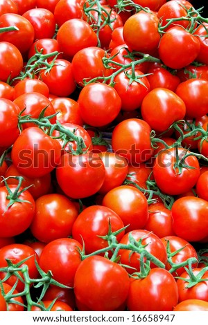 Bunch of fresh red tomatoes on vine