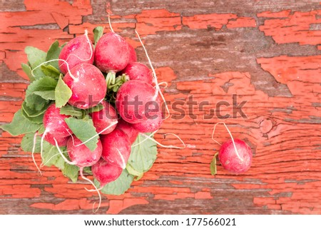 Bunch of fresh ripe crisp red radishes, favourite salad ingredients with their peppery taste, lying on an old rustic wooden board with cracked peeling red paint and copy space - stock photo