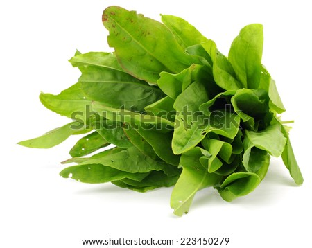 Bunch of fresh sorrel on a white background - stock photo