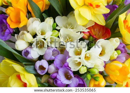 bunch of fresh spring  freesea flowers close up  - stock photo