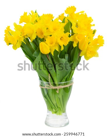 bunch of fresh spring yellow daffodils  and tulips in glass vase isolated on white background - stock photo