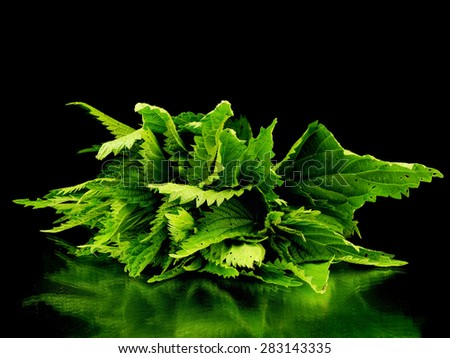 Bunch of fresh stinging nettle on a black background with reflection - stock photo