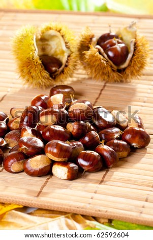 Bunch of freshly picked chestnuts (Castanea) with prickly shell in background. - stock photo