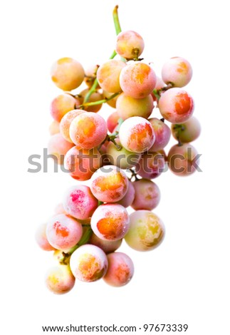 Bunch of frosted, icy muscat grapes. Isolated with white background. Colorful image. - stock photo