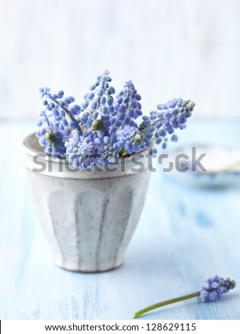 Bunch of grape hyacinths in a ceramic vase - stock photo