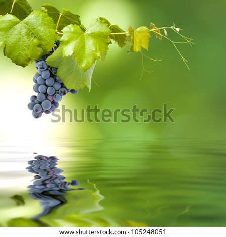 bunch of grapes in the field of strain on a green background and reflection in the pond - stock photo
