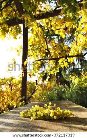 Bunch of grapes. Lavaux region, Switzerland - stock photo