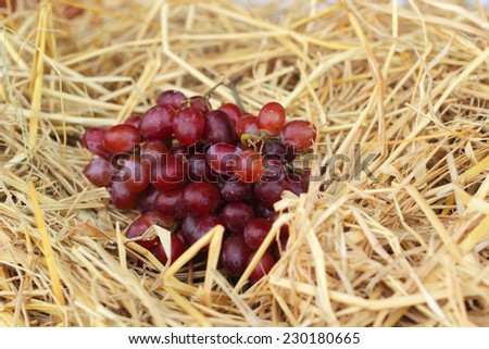 Bunch of grapes on straw