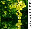 Bunch of grapes over water - stock photo