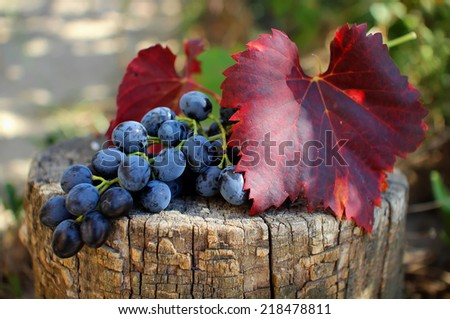 Bunch of grapes with leaves lying on the stump  - stock photo