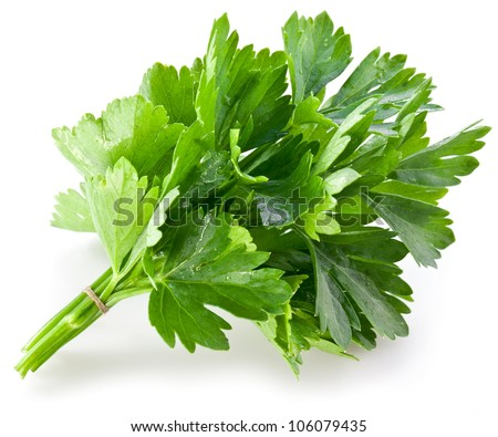Bunch of green coriander on a white background. - stock photo