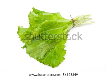Bunch of green leaves of salad