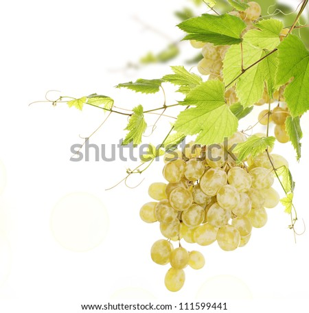 Bunch of green ripe grapes on a white background - stock photo