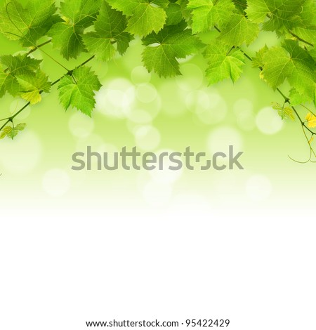 Bunch of green vine leaves on a white background - stock photo