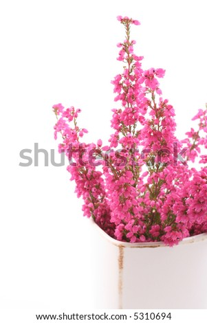 bunch of heather in vase isolated on white - stock photo