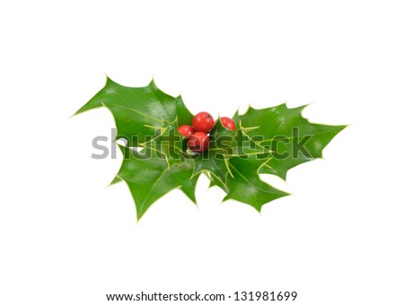 Bunch of Holly - stock photo