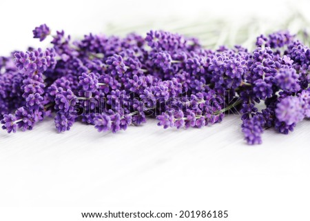 bunch of lavande on white background - flowers and plants - stock photo