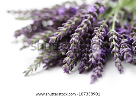 bunch of lavender flowers - flowers and plants - stock photo