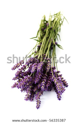 bunch of lavender flowers isolated on white - flowers and plants