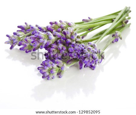 Bunch of lavender flowers on a white background