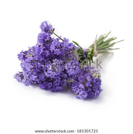 Bunch of lavender flowers on white background  - stock photo