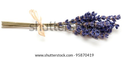 bunch of lavender isolated on white - stock photo
