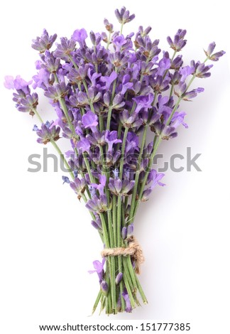 Bunch of lavender on a white background.
