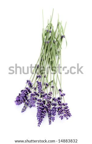 bunch of lavender on white background
