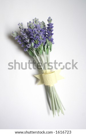 Bunch of lavender on white background - stock photo