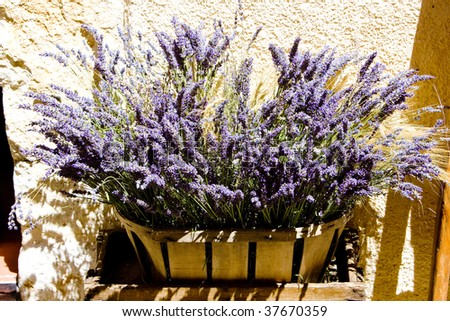 bunch of lavenders, Aiguines, Var Departement, Provence, France - stock photo