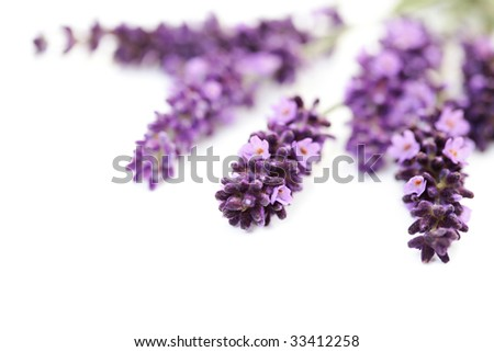 bunch of lawender flowers on white background