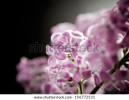 Bunch of lilac flowers in white vase - stock photo