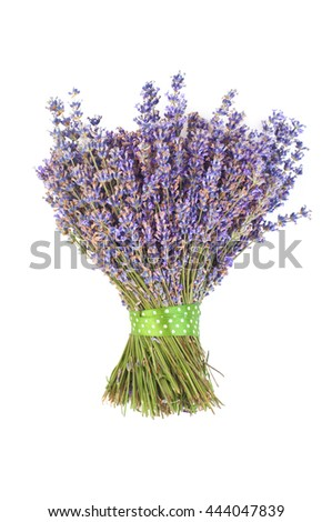 Bunch of lilac lavender on a white background. - stock photo