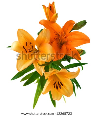 Bunch of Lily - stock photo
