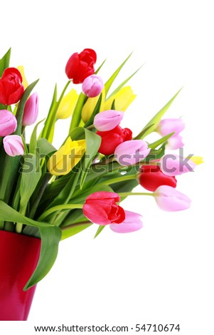 bunch of lovely spring tulips - flower and plants - stock photo