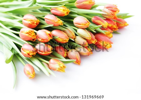 bunch of lovely tulips on white - flowers and plants
